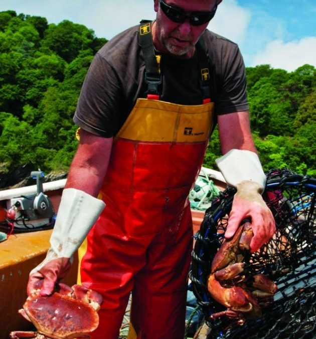 Blue Sea Food Company Increases Sales of Live Devon Crab to China