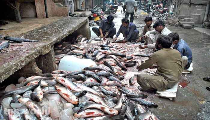Pakistani Seafood Gaining Popularity in China