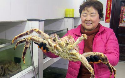 Growing taste for quality seafood lifts businesses in Hunchun