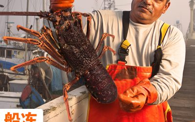 Lobster Index Says China Still on the Boil