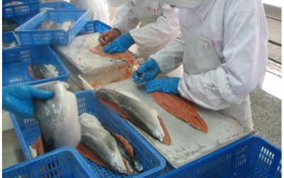Dalian firm to boost Pacific salmon's China prospects